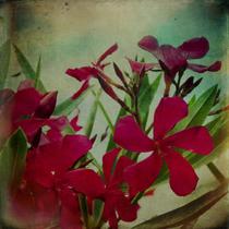 """The secret of my garden"" vintage artistic floral photograph"