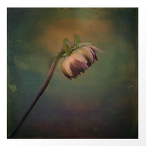 """""""Once Upon a Time a lonely Flower"""" Nostalgic flower photographt hand painted, minimal art"""