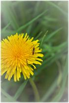 ... die unterschiedlichsten Insekten ein wichtiger Energielieferant