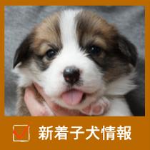 新着子犬情報