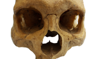item-tri0061-dajak-dayak-human-skull-boelongan-east-borneo/
