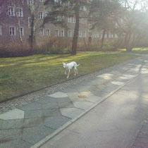 Die Besitzerin sah ihre Hündin bei uns auf der Seite als Sichtung. Erst da wußte sie das der Hund nicht zuhause ist :-)