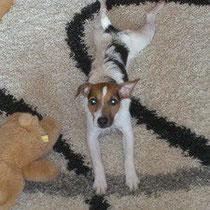 Nun aber endlich Klein Gizmo wurde aus der Tiersammelstelle abgeholt und ist wieder bei seinen Besitzern!