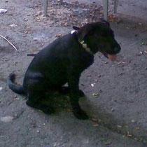 Leo wurde uns als Fundhund gemeldet, daraufhin wurde der Besitzer durch uns informiert.