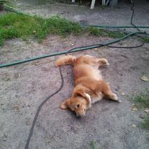 Bobby war in der Tiersammelstelle und wurde abgeholt.