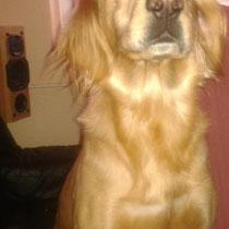 der jenige welche der unseren hund gestern gefunden hat, hat den aufruf bei fb gesehen und mich angerufen