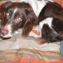 Ein Bekannter vom Besitzer hat den Hund auf unserer Seite erkannt und dem Besitzer bescheid gegeben wo sich der Hund befindet