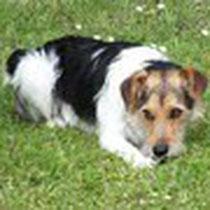 """Charly, welcher uns als """"unerzogener"""" Fundhund gemeldet wurde, ist wieder bei seinem Frauchen. Er ist fix und foxi nach dem ereignisreichen Tag. Vielen Dank an alle für die Hilfe und ein großes Dankeschön an den Finder Michael"""