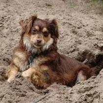 """Besitzer: """"Vielen, Vielen Dank! Aufgrund Eurer Anzeige habe ich meinen Hund zurück. Es geht ihr gut und sie ist unverletzt."""""""