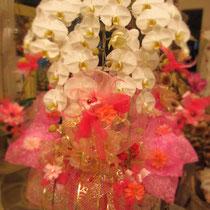 華やかラッピング胡蝶蘭