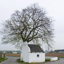 Kronen-Bild einer Winterlinde im ländlichen Raum. Historische Aufnahme, der Baum wurde nach Sturmschäden aus Sicherheitsgründen gefällt. Foto H.Kuhlen, Aufnahme-Datum 26.04.2008