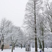 Skulptur im Winter mit dem markanten Urwelt-Mammut-Baum, Aufnahme-Datum: 11.02.2017