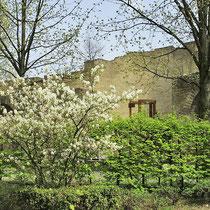 Detail Rabbiner Neumark-Weg im Frühlings-Aspekt mit Felsenbirne, Hainbuchen-Hecke und Baumbestand,  Aufnahme-Datum: 04.05.2006
