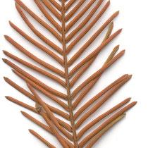 Detailaufnahme, totes, abgefallenes Zweigstück im Winter, Foto HK.; Aufnahme-Datum: 22.11.2004