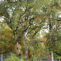 Herbstaspekt, Foto HK.; Aufnahme-Datum: 17.10.2017