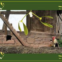 Misteln verschließen Türe und Tore und wirken apotropäisch