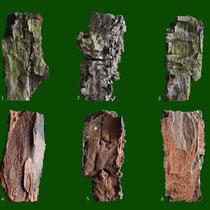 Borkenstücke, 1-3 Vorderseiten, 4-6 Rückseiten, Foto 6 zeigt einen Schrägschnitt, dabei erkennbar die einzelnen Korklagen, Erstellt H.Kuhlen, 08.01.2016