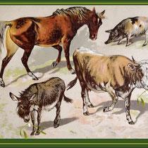 Mistelzweige in Wiesen und Felder gesteckt schützt gegen Obstverderb durch Raupen und gegen Hagelschlag und macht das Vieh widerstandsfähig.