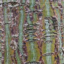 Rindenbild, Davids Schlangenhaut-Ahorn, Acer davidii