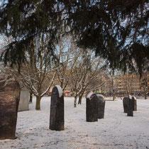 Winter-Zwischenspiel, die von oben in die Bildmitte hineinwachsende Eibe wurde mittlerweile gerodet, Aufnahme-Datum: 08.12.2012