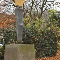Wildwuchs von Holunder inmitten der Ilex-Bepflanzung, Aufnahme-Datum: 03.12.2012