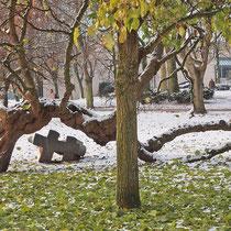 Winterspekt, Aufnahme-Datum: 08.12. 2012