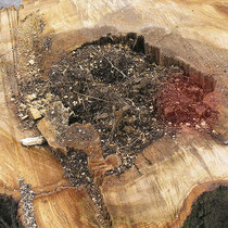 Innenwurzeln in einer Stammhöhlung. Rot markiert, stärkere Wurzeln von 3-5 cm Durchmesser. Foto H.Kuhlen