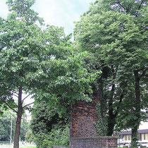 Baumbestand rund um den mit Efeu berankten Schäferturm, Aufnahme-Datum: n.b.