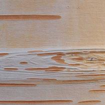 Inneres Rindenbild einer Papier-Birke, Betula papyrifera