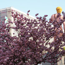 Japanische Zierkirsche im Farben-Wettstreit mit der Skulptur, Aufnahme-Datum: 25.10.2010