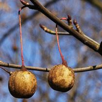 Reife Früchte im Detail, Foto HK. Aufnahme-Datum: 09.01.2006