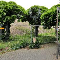 Trompetenbaum-Gruppe, von ursprünglich 4 Bäumen wurde bereits ein Baum gefällt. Aufnahme-Datum: 20.06.2018