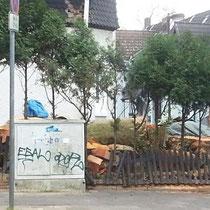 Platanenfällung (2) , Franz Wieder-Str. Ecke Stahlstr. 16, Foto B.Bevc