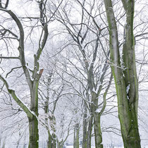 Winteraspekt, Aufnahme-Datum: 11.02.2017