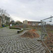 Stadtmauer im Mahnmalbereich, Ausgefrästes Wurzelmaterial der Ungarischen Eichen, Aufnahme-Datum:22.02.2020