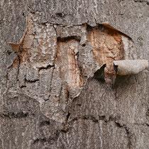 Borken-Schadbild durch Pilzbefall von: Foto: HK., Aufnahme-Datum: 17.10.2017