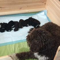 die stolze Mama mit ihren 8 kleinen Kobolden