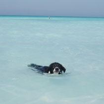 nuotare mi piace moltissimo e guarda come sono brava