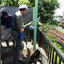ポンプによるコンクリート打設。長い管をとりまわし、ジョイントを交換しながらコンクリートを流していきます。