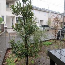 施工前の中庭の様子。デッキがある為高低差が大きく、更に駐車場へのアクセスも出来ないので、使いにくいお庭でした。