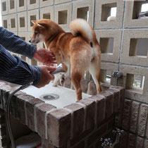 腰を伸ばしたまま使える、ワンちゃんにも優しいお湯が出るシャワー水栓です。