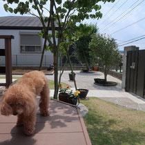 ワンちゃんと一緒にお庭の撮影。既存のタイルアプローチに寄り添うよう、ポルフィードの乱形石で雑草が生えない園路を作ります。