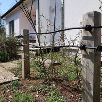 ねじりアイアンがシンプルでかわいいフェンスです。