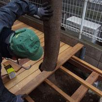 既存の樹木周りは、幹の曲線をみて床板を切削加工します。