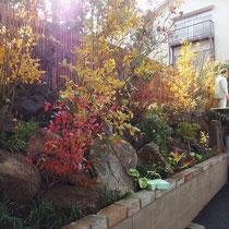 リョウブやツリバナ、ナナカマド等、彩りが美しい花や紅葉を楽しむ植栽を中心に植えました。