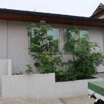 着工前、シマトネリコ2本、低木類が植わった北側花壇スペースです。
