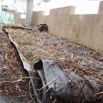 以前敷設されていた安価な防草シートの裏面、メッシュを突き破った雑草は地上からはとても抜取りにくく、むしろ雑草を保護するシートになっていました。
