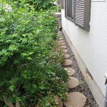 以前の花壇と脇道は、植物に圧倒され歩きにくい場所でした。