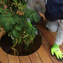 バラのオベリスクを配置する場所は、丸く床板をくり抜いて設置し直します。