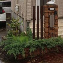 玄関前の植込みスペース。ビャクシン類の植木でボリューム感ある花壇です。